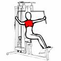 Mięśnie klatki piersiowej