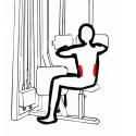 Mięśnie talii - mięśnie skośne brzucha
