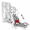 Mięśnie ud